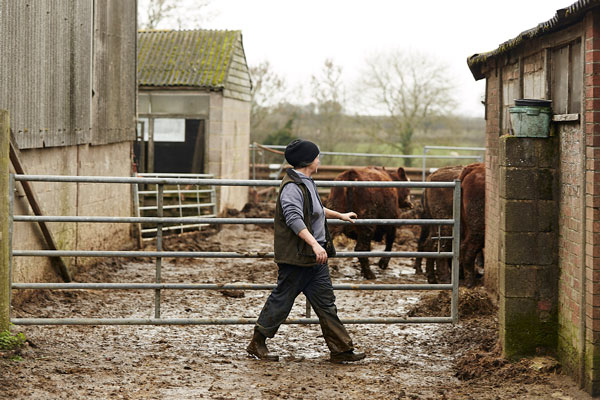An introduction to British Farming
